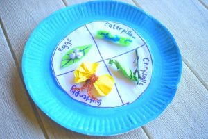 Butterfly Lifecycle Paper Plate Craft