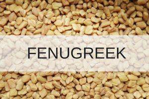 fenugreek to increase milk supply